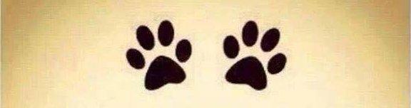 Kutyaélet - Angyalok négy lábon